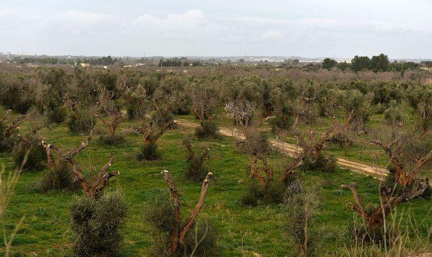 Falso olio extravergine d'oliva: maxi-sequestro a Salerno