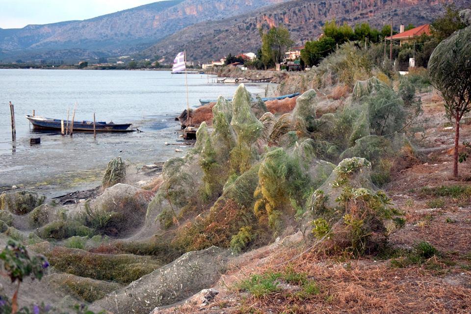 La gigantesca ragnatela che ricopre la spiaggia greca