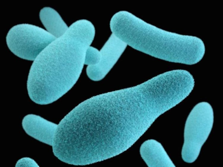 споры бактерий фото подозревают получении взяток
