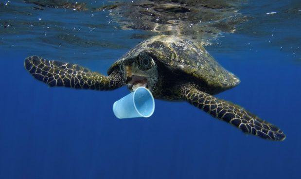 Scoperta una seconda isola di plastica: questa volta è nell'Atlantico