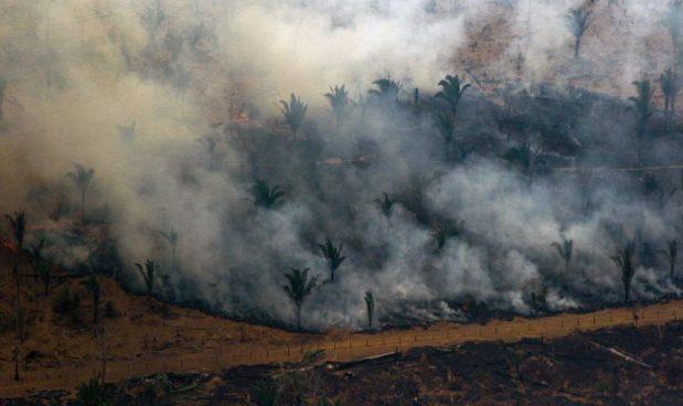 Amazzonia, non preoccupiamoci per l'ossigeno (NON è il polmone verde del mondo e ne produce molto meno del 20%) ma per la CO2