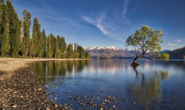 Uno scellerato gruppo di vandali deturpa l'albero più famoso (e più bello) della Nuova Zelanda