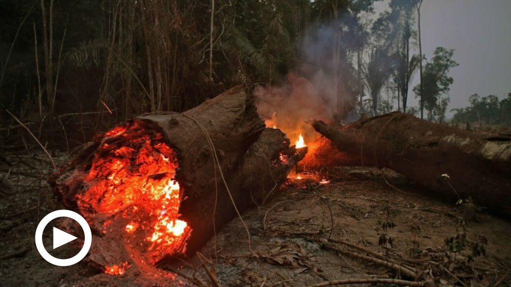 Brasile, non brucia solo l'Amazzonia: è allarme incendi nel Pantanal, la riserva naturale del pianeta