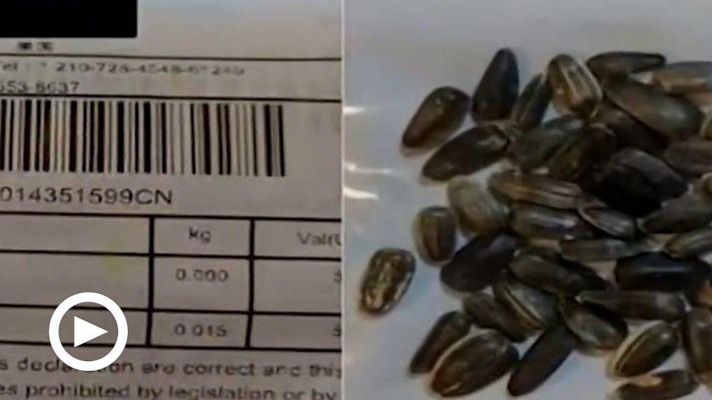 Il mistero dei semi cinesi consegnati via posta a centinaia di americani. Ma nessuno li ha ordinati