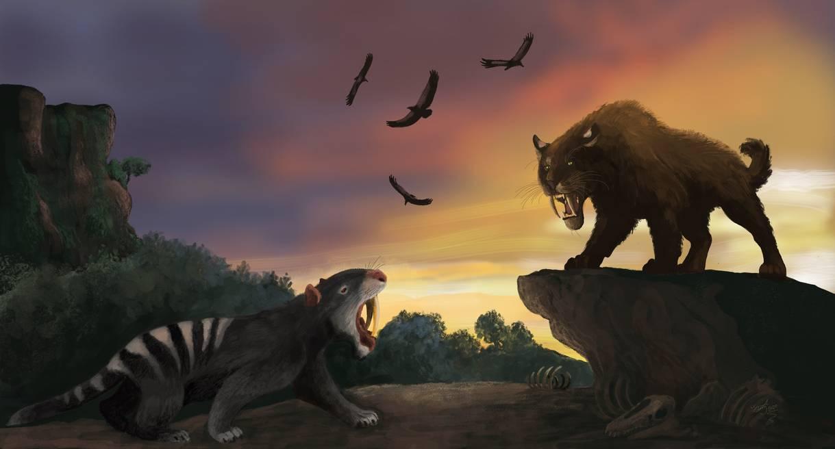 """La tigre dai denti a sciabola Smilodon incontra il marsupiale sudamericano, Thylacosmilus. Questa è un'immagine classica di presunti """"settentrionali superiori"""" che competono con i """"meridionali inferiori"""", ma tali incontri in realtà si sono verificati raramente poiché molte delle specie del sud si erano già estinte. 'The rise of Smilodon', Hodari Nundu"""