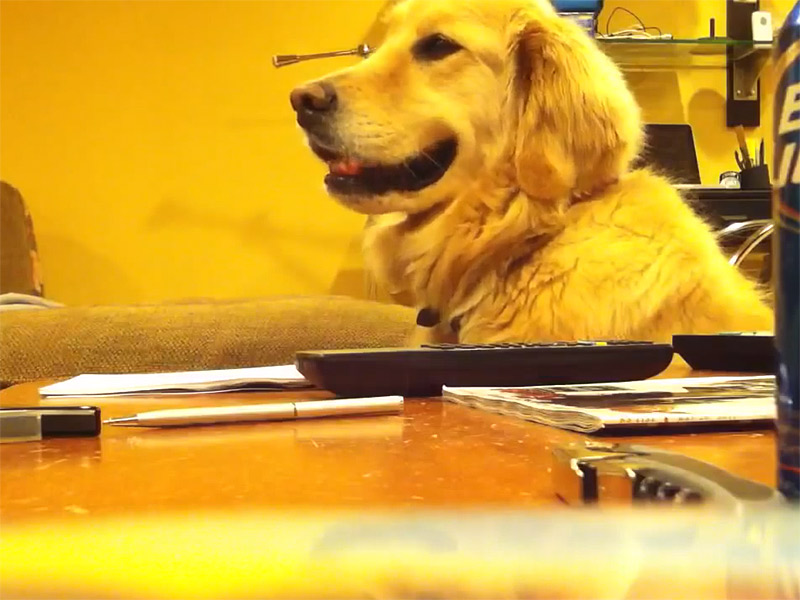Rock&Dog