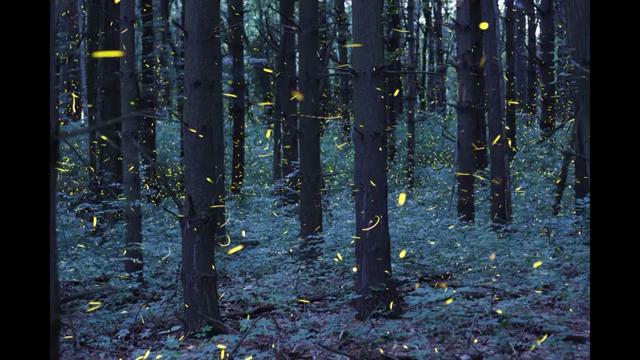 Il bosco è incantato: la magia delle lucciole in time-lapse