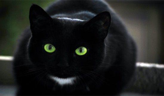 L'origine delle superstizioni: perchè porta sfortuna un gatto nero