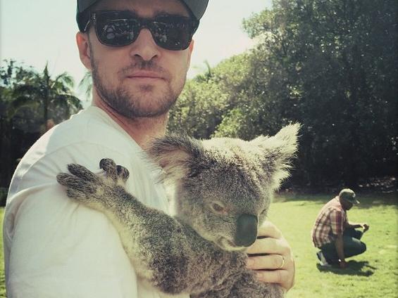 Justin Timberlake e il Koala, l'abbraccio su Instagram