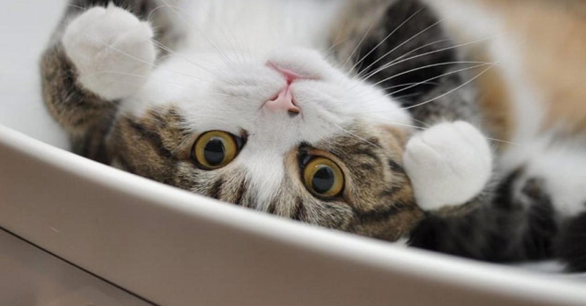 Da Maru al Colonel Meow: le storie dei gatti più famosi del web