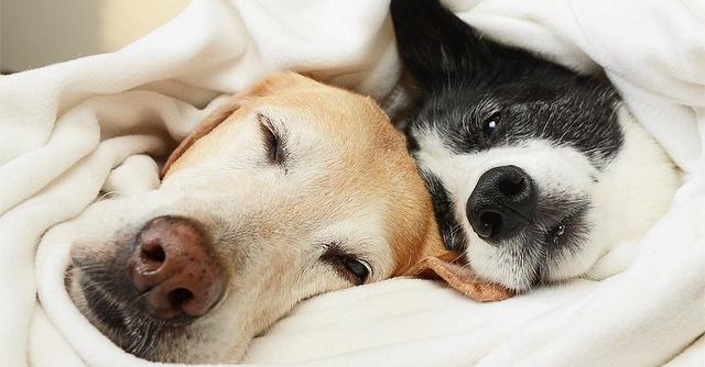 10 cose che tutti i padroni di cani fanno
