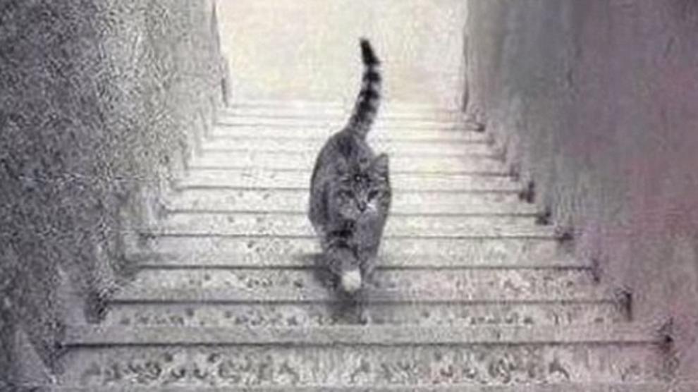 Sale o scende? Dopo il dilemma del vestito, ecco quello del gatto sulle scale