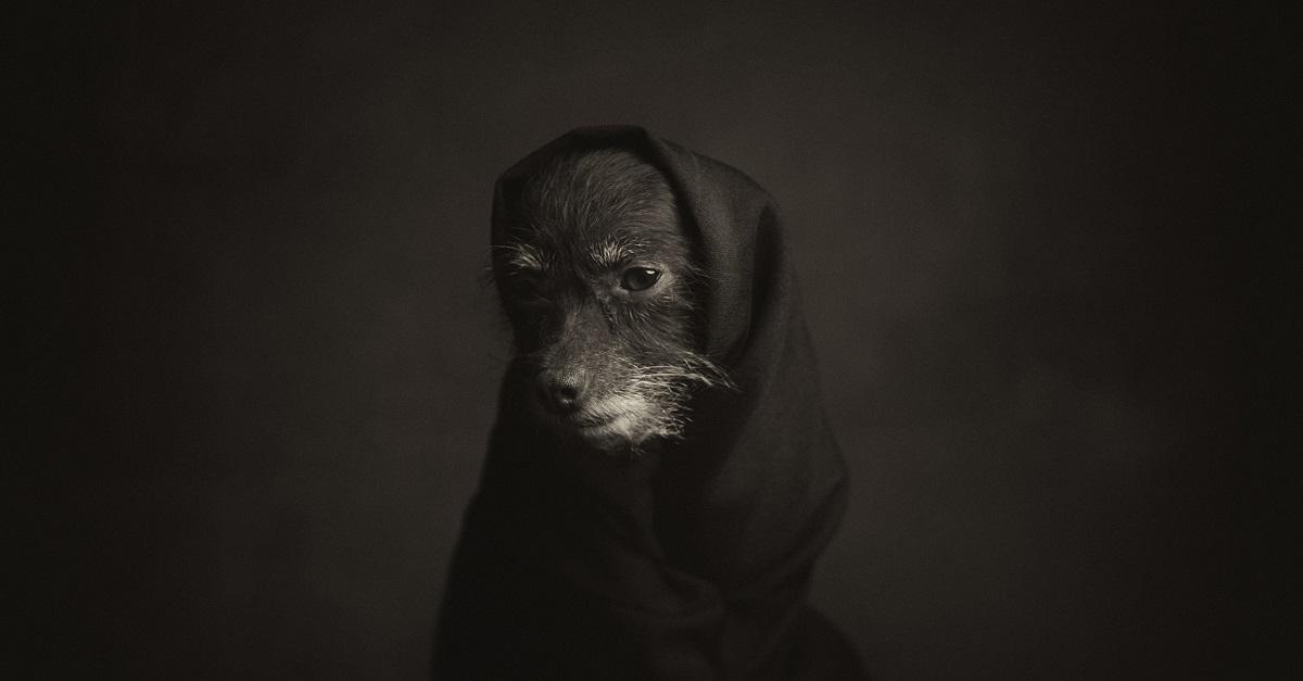 Anche gli animali provano emozioni profonde: un fotoprogetto lo dimostra