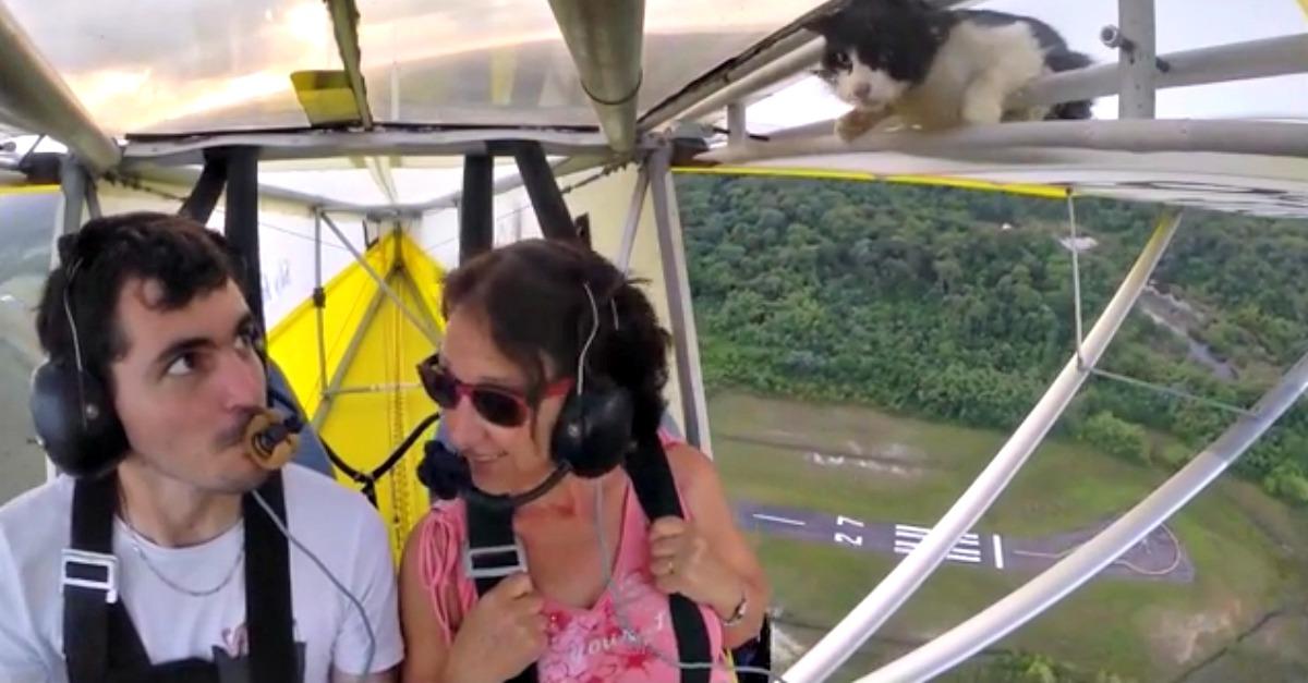 A bordo dell'ultraleggero questo gatto 'clandestino' vi farà rimanere col fiato…sospeso