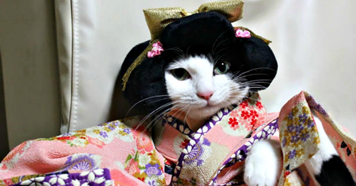 Gatti in kimono, ecco cosa succede quando il regno felino incontra l'Oriente