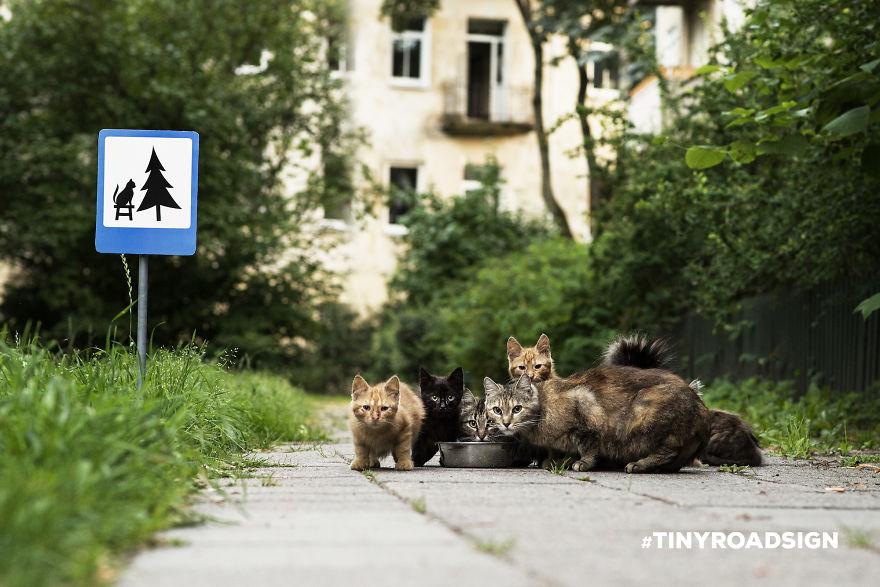 segnali stradali felini