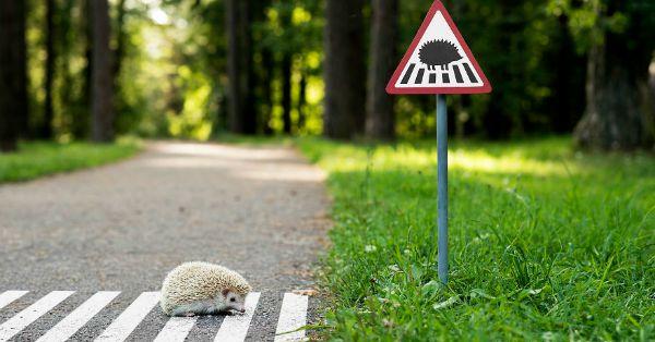 'Attraversamento ricci' e 'Area di riposo dei gatti': ecco i segnali stradali per animali, perché anche loro vivono in città!