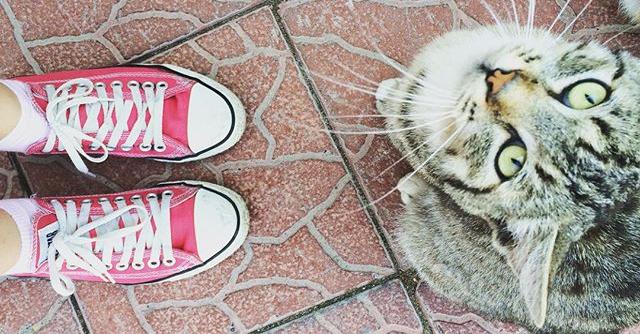 10 segnali che sei sulla strada giusta per diventare una gattara