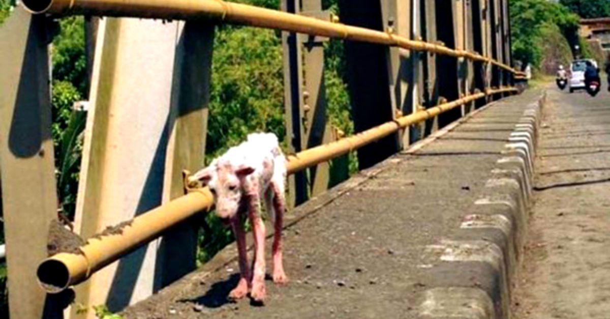 """Strappata da morte certa e adottata. Ecco gli effetti """"devastanti"""" dell'amore su una cucciola abbandonata"""