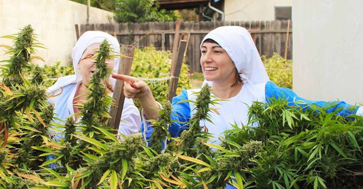 California: le suore che coltivano marijuana per scopi terapeutici