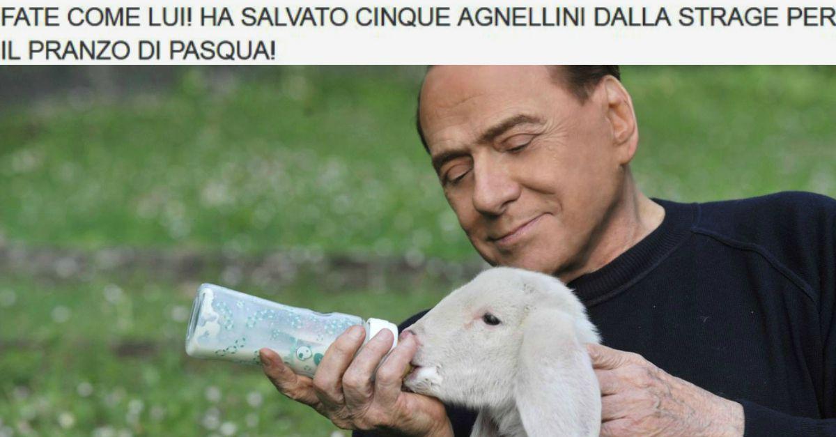 """Berlusconi allatta un agnellino """"salvato dalla Pasqua"""" nel nuovo video dell'associazione animalista"""