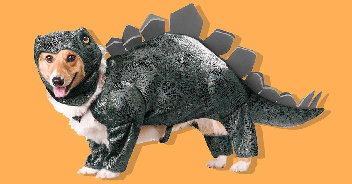 Halloween Maschere.Le Maschere Per Cani Perfette Per Halloween Radio Deejay