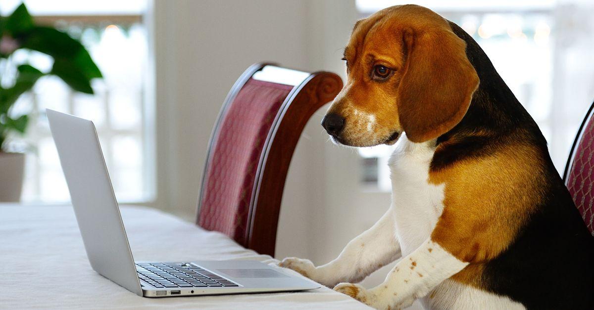 Bau Like a Deejay, 10 gadget che il vostro cane o il vostro gatto vorrebbero acquistare online