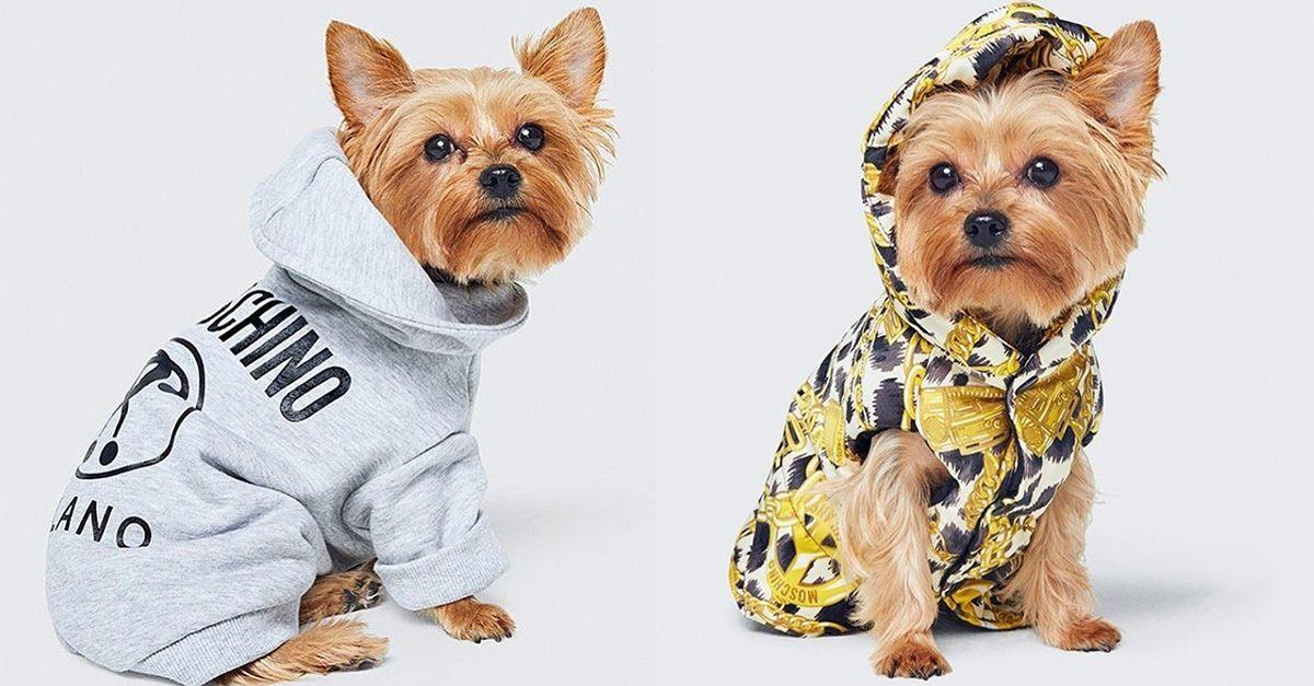 È in arrivo la collaborazione tra H&M e Moschino: ecco la linea per gli animali