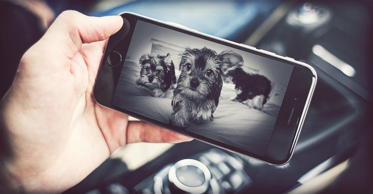 Scopri che fanno quando sei fuori casa: le migliori videocamere per sorvegliare i tuoi animali domestici