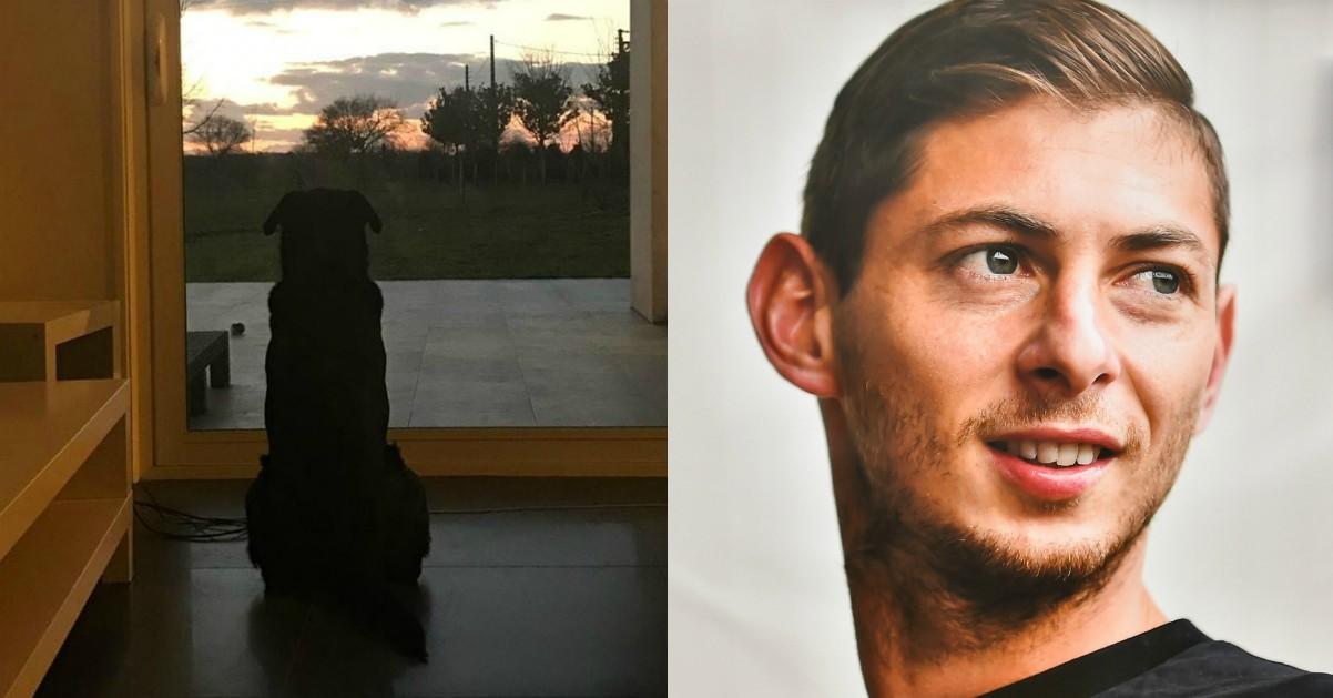 """Il commovente scatto del cane di Emiliano Sala: """"Ti aspetta"""""""