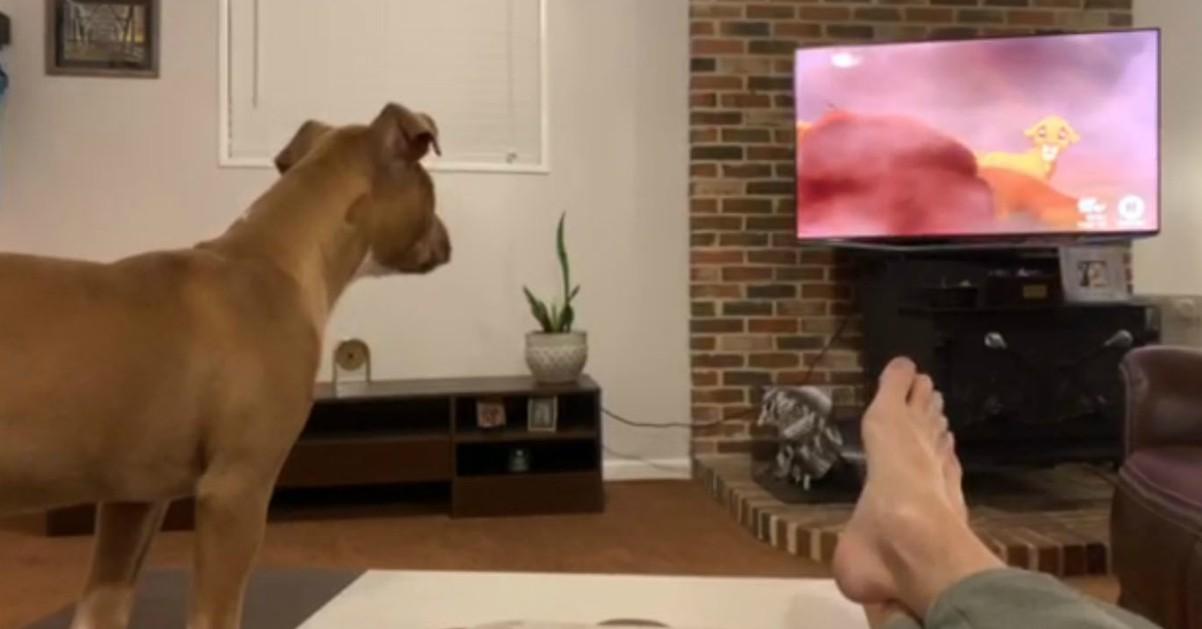 """Il cane piange davanti alla tv: """"Il re leone"""" lo fa commuovere"""