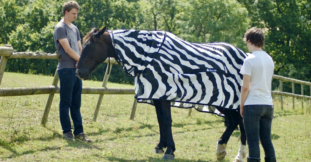 Perché le zebre hanno le strisce? L'incredibile esperimento con il cavallo travestito