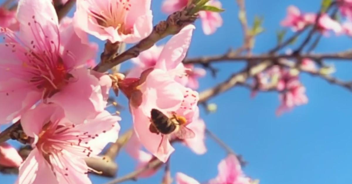 Cos'è il Beesexual, il nuovo genere di porno che salverà il mondo