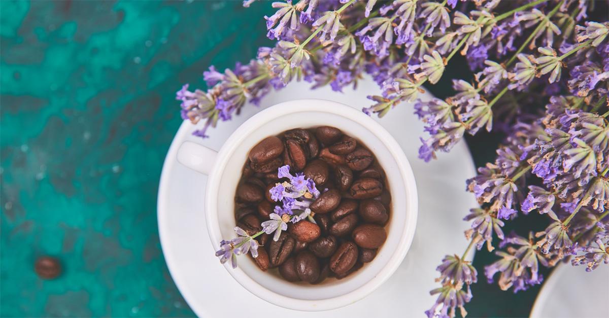 Il caffè contro le zanzare: un rimedio naturale che non tutti conoscono