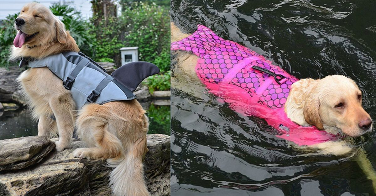 Pesce, squalo o sirena: ecco il salvagente per il tuo cane