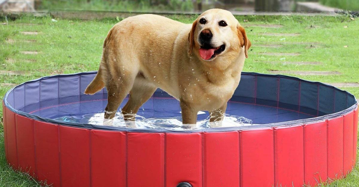 Anche i cani sognano un'estate al fresco: ecco la piscina perfetta per loro