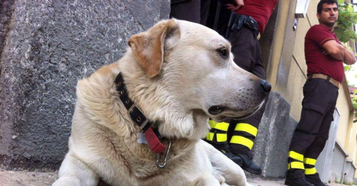 Addio al cane adottato dai pompieri: 14 anni in caserma ad aspettarli dopo le missioni