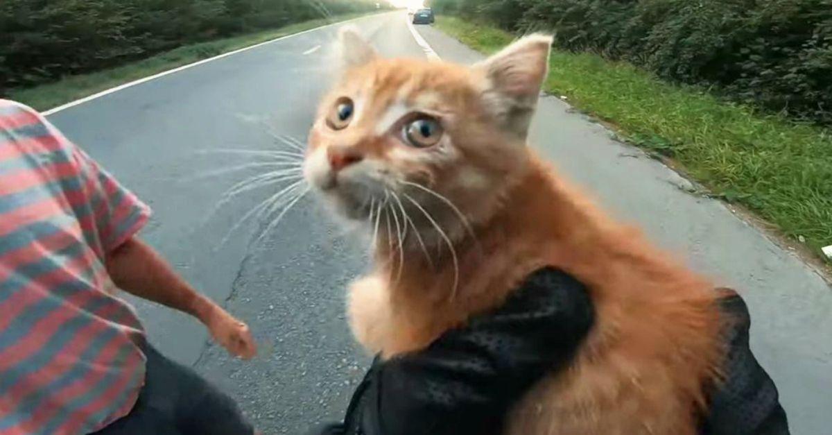 C'è un gattino abbandonato in mezzo alla strada: il motociclista si ferma e lo salva