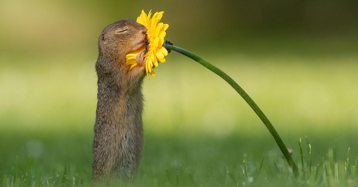 Un fotografo ha immortalato uno scoiattolo mentre odora dei fiori: gli scatti sono dolcissimi