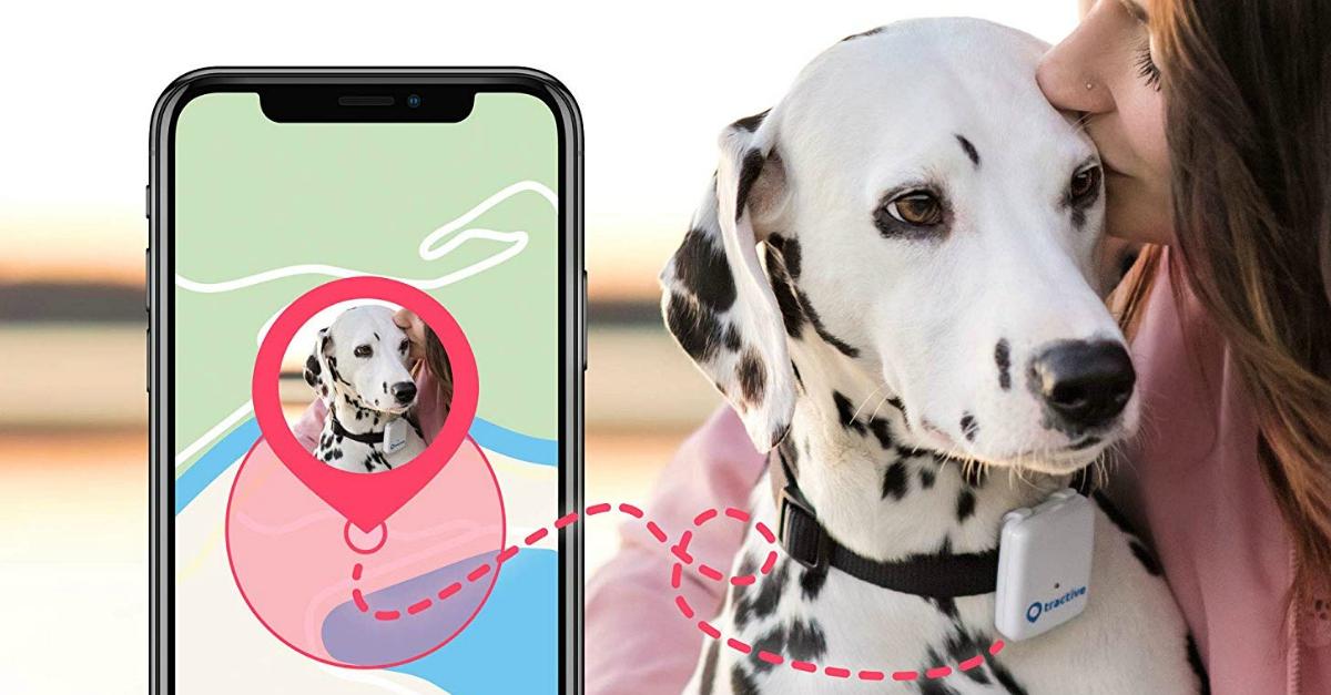 Ecco il localizzatore gps per cani e gatti