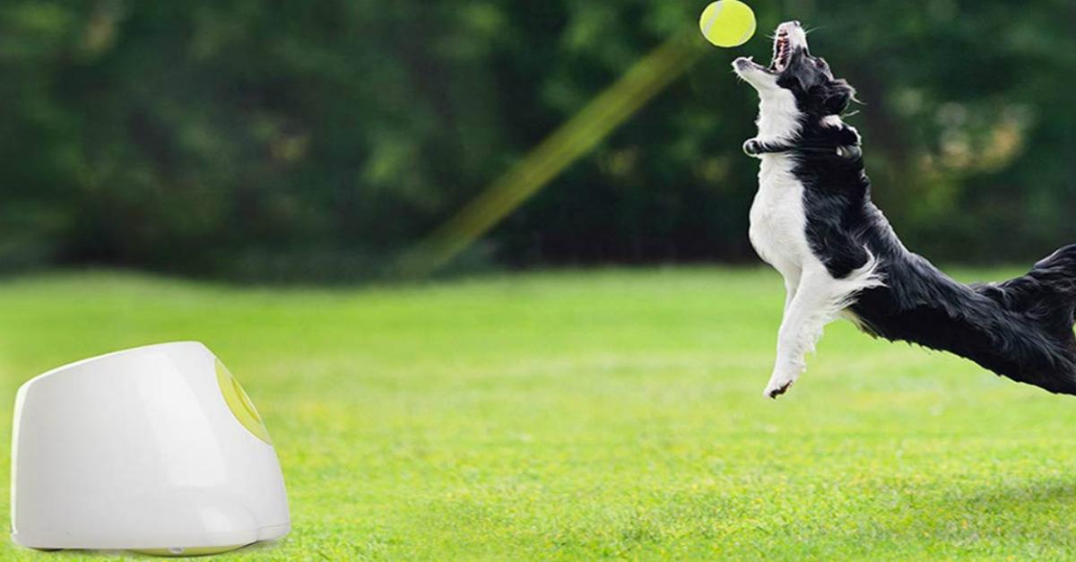 Ecco il gioco che lancia la pallina al tuo cane anche quando non ci sei