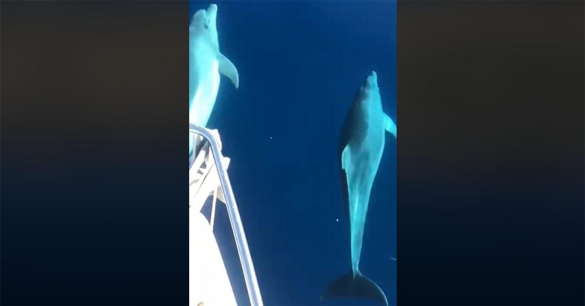 Il tuffo dei delfini a largo di Maratea: spettacolo d'autunno
