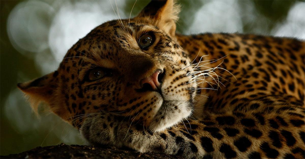 Wildlife Photographer of the Year, in mostra l'incredibile bellezza degli animali