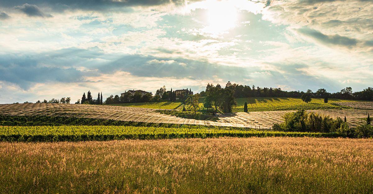 Le colline del Prosecco sono patrimonio dell'umanità: ecco le tappe da non perdere