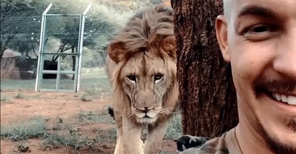 Sudafrica, spunta un leone alle sue spalle mentre fa un video-selfie: il finale lascia a bocca aperta