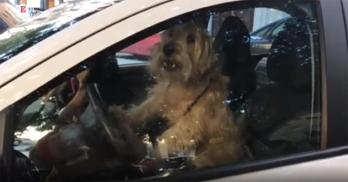 Soli in macchina si attaccano al clacson: due cani richiamano la padrona che è andata al bar