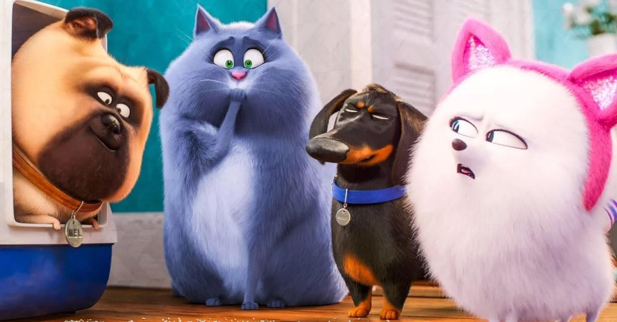 Arrivano le playlist per i cani e gatti lasciati a casa da soli. L'idea di Spotify