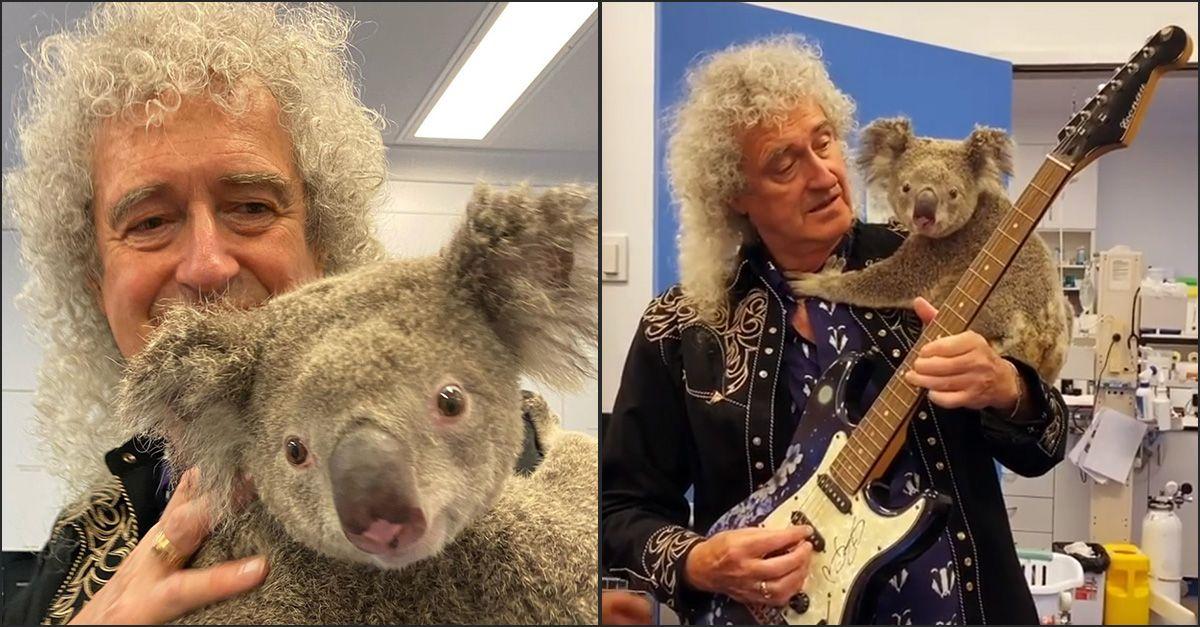 Australia, Brian May suona la chitarra con un (tenerissimo) koala in spalla