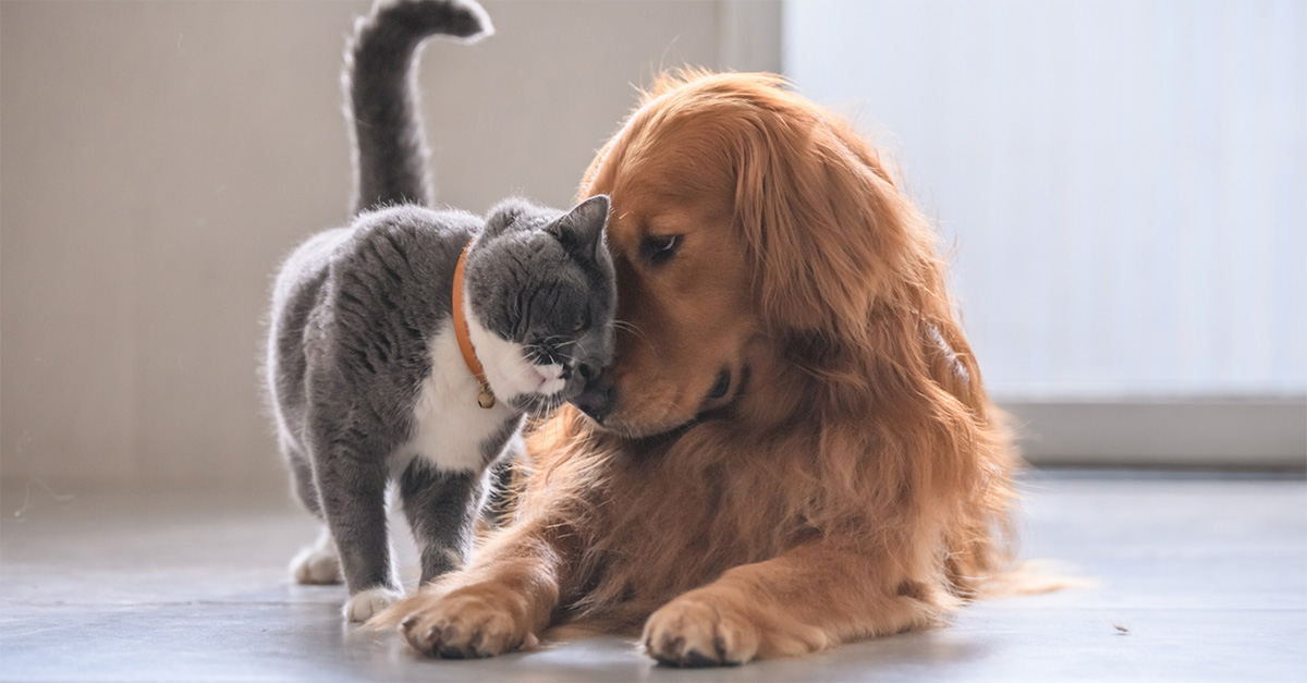 Coronavirus, le cinque linee guida per la pulizia di cani e gatti