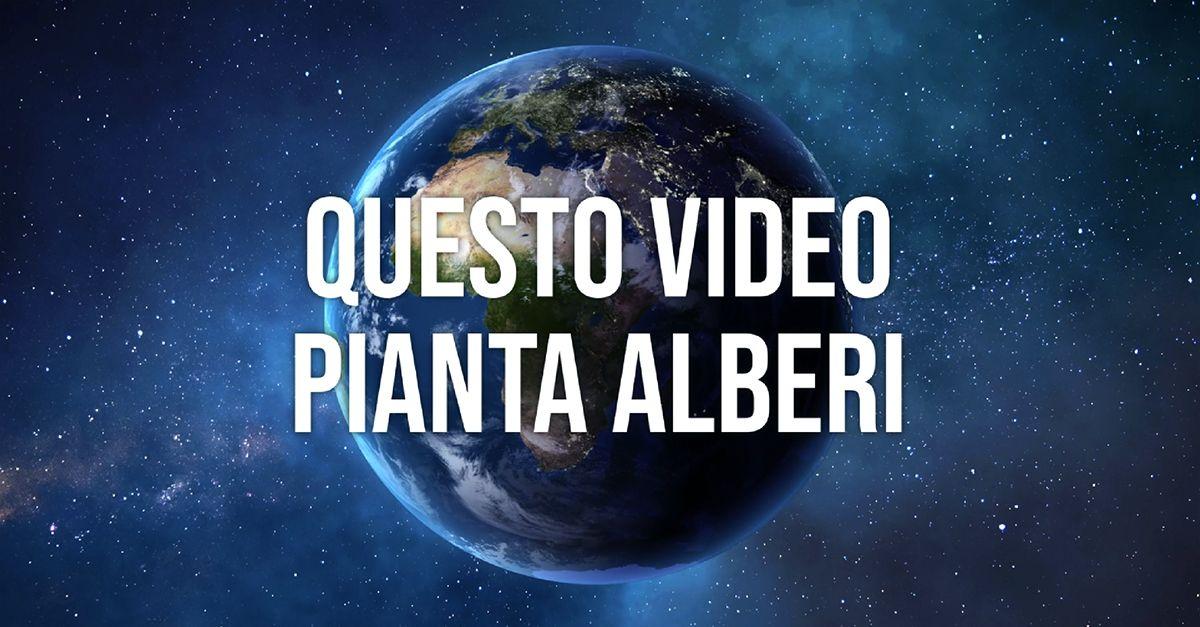 Earth Day 2020 – Un video che pianta alberi. Online la nuova campagna di Treedom